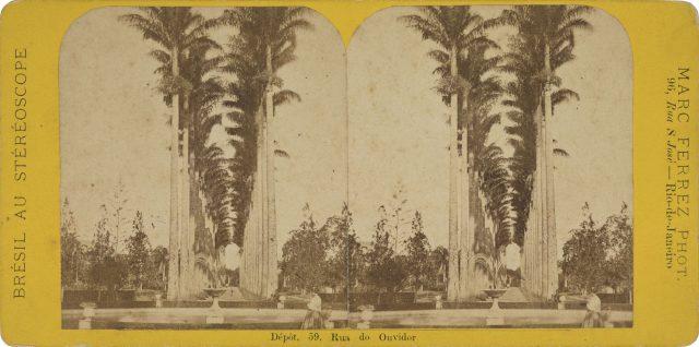 Vista da aleia das palmeiras imperiais no Jardim Botânico. Rio de Janeiro, c. 1869. Foto de Marc Ferrez. Acervo Gilberto Ferrez / Acervo IMS