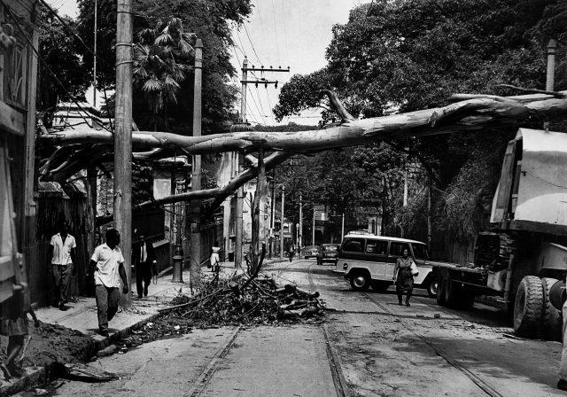 Árvore atravessada na rua Cosme Velho – <em>O Jornal</em>, 20 de janeiro de 1966 (Arquivo Diários Associados-RJ/Acervo IMS)