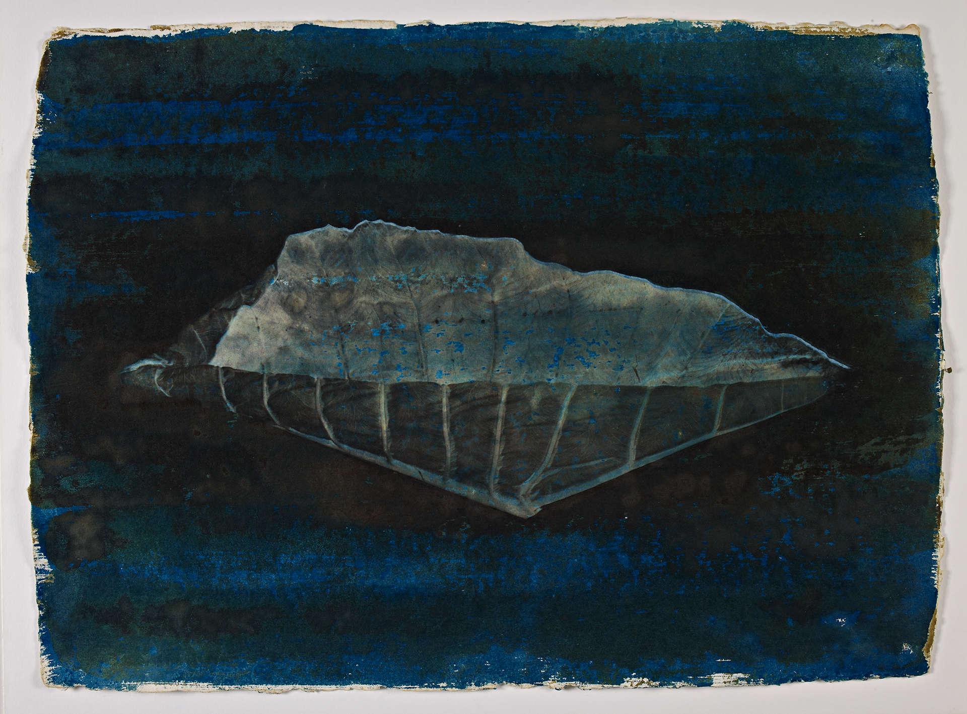 Série Orelha de elefante, 1996. ©️Kenji Ota