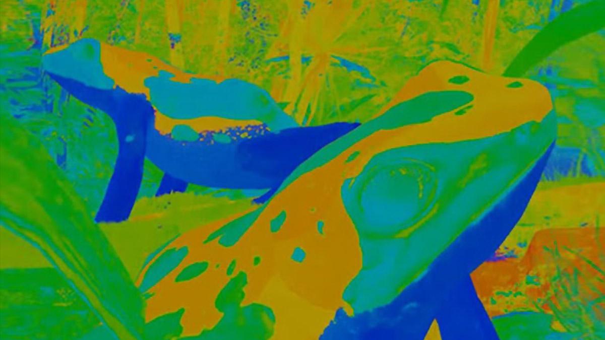 Dois sapos aparecem em ambiente cheio de vegetação. Toda a imagem tem cores vivas que não correspondem à realidade