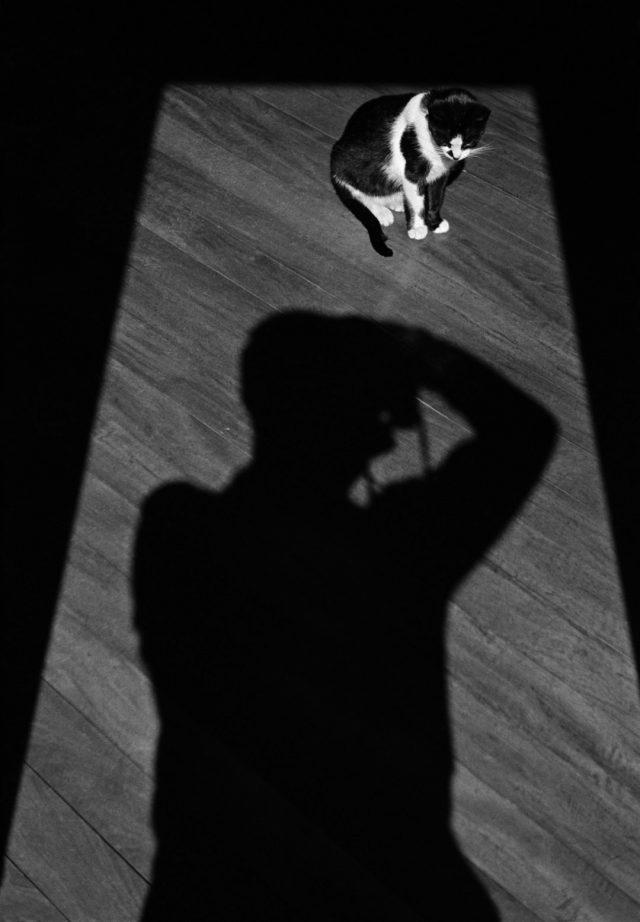 Autorretrato com gato, 1946. Campos do Jordão, SP.  Foto de Thomaz Farkas © Thomaz Farkas State/ Acervo IMS